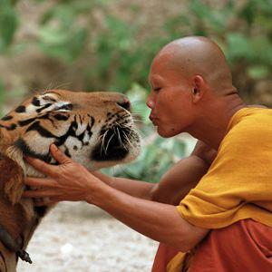 Tiger a mních
